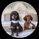 Quirky wedding ideas pet friendly weddings
