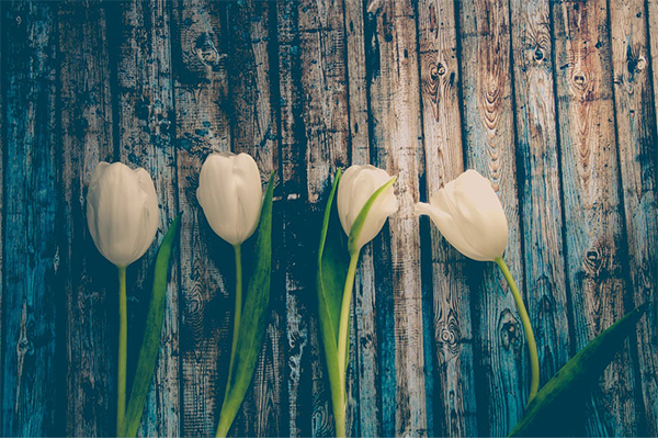 White tulips and what they mean